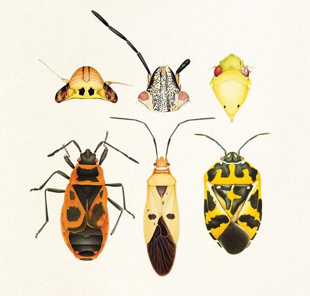 Mutant Bugs
